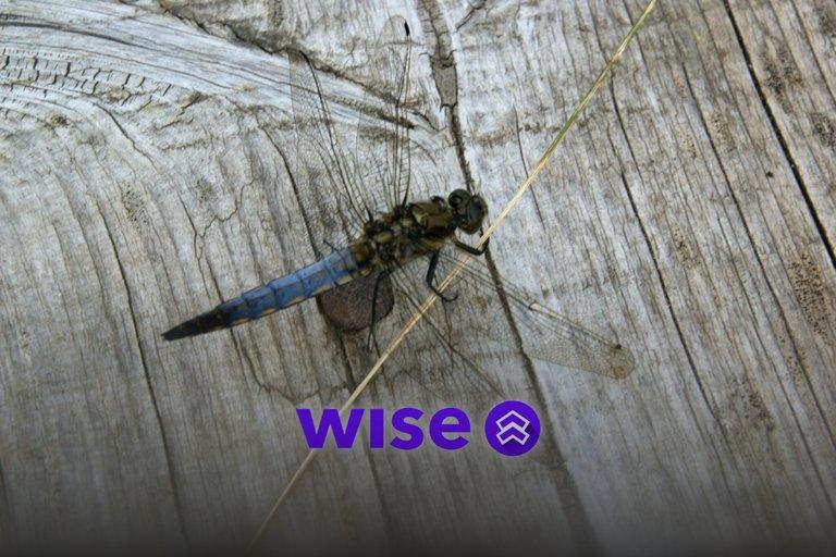 Wise, blockchain a przyroda